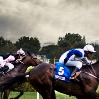 HorseCashBuilder Review