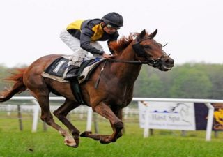 MK Horse Racing Tips Review