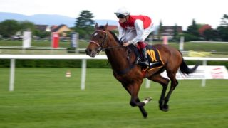 The BSP Tipster Review